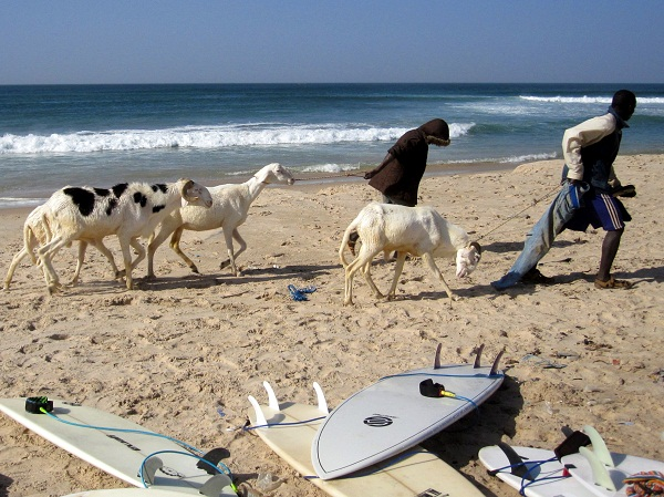 goats and surfboards