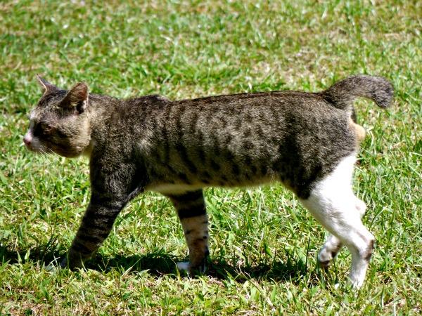 strange cat 1