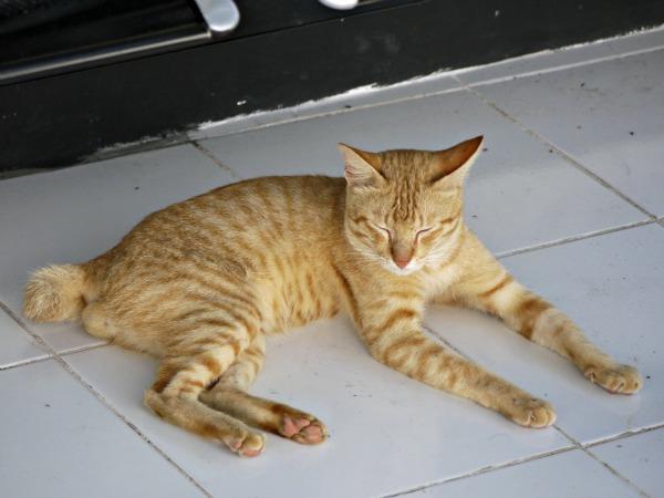 weird cat 2