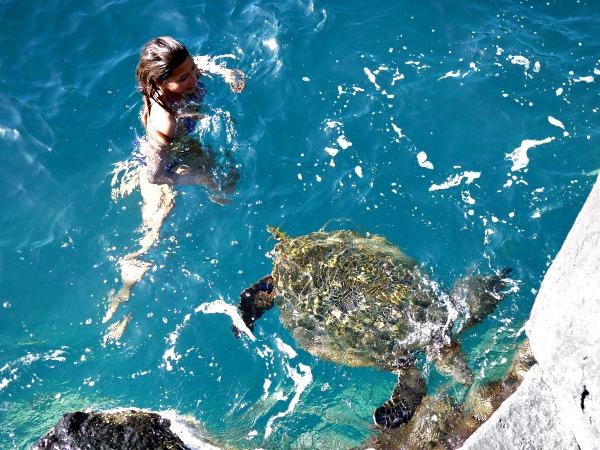 turtle king