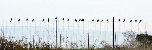 bird-line