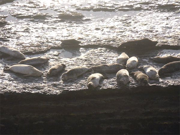 wilder seals